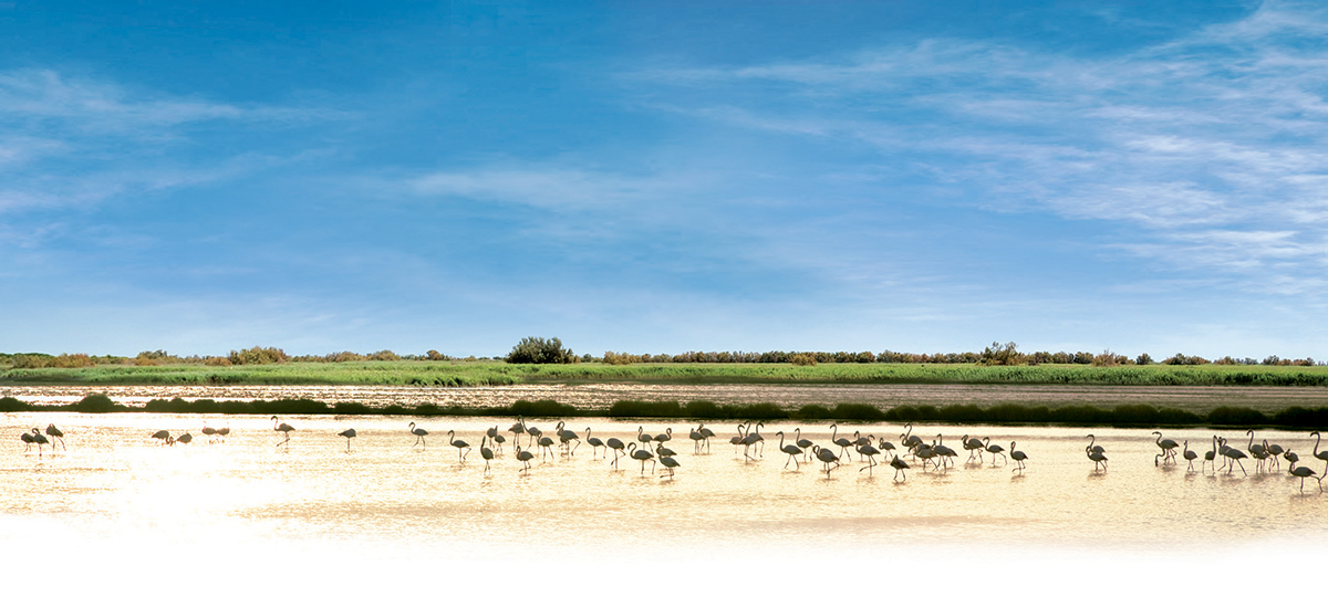 camargue flamants roses